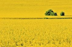 Yellow and green Photo by Aga Jamro -- National Geographic Your Shot