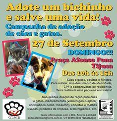 BONDE DA BARDOT: RJ: Campanha de adoção de cães e gatos na Tijuca, neste domingo (27/09)