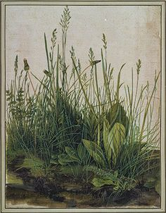 Albrecht Dürer (1471–1528)     The Great Piece of Turf - still my favorite painting ever.