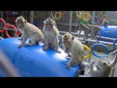 Ady Gil bought about 1,400 monkeys for $2 mil to save them from labs! - YouTube