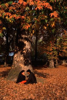 steve mccurry, Chinar Trees, Kashmir