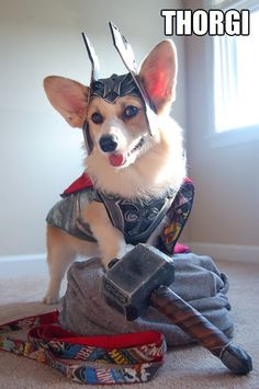Thorgi. This is my dog's new costume