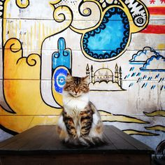21 Instagram Cat Pictures That Will Make You Pack and Leave for Istanbul Today #cats #travel #Istanbul