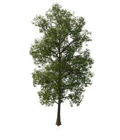 3D道路绿化树模型_道路绿化树3D模型下载_3D道路绿化树模型免费下载