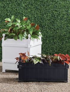 The boxed planters of the Orangerie and gardens at the Palace of Versailles have been icons since Louis XIV began his orange tree collection in 1663. We have replicated the famed design with our exclusive cast-aluminum Versailles Planter, versatile enough for citrus trees, olive trees, boxwood (especially topiary), or large plants. Perforated bottom for drainage.