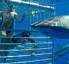 Hawaii Shark Encounters.  Definitely on my Hawaii bucket list!