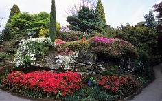Famous Rock Garden at Leonardslee Gardens, West Sussex, England | Flowering Japanese azaleas and rhododendrons in May (7 of 14)