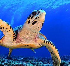Olive Ridley, Small Turtles, Turtle Dove, Lovely Creatures, Creature Design, Reptiles, Nature Photography, Collections, Sea