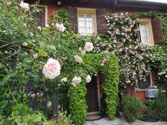 Ca' delle Rose www.cadellerose.org