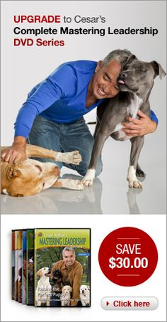 Cesar's Way — The #1 New York Times Bestseller (Hardcover) | Dog Whisperer Cesar Millan
