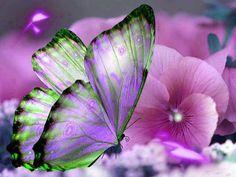•♥• Beautiful Butterfly Landing on Flower