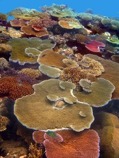✯ Coral Reefs, Queensland, Australia It has been ten years this summer since I visited Australia and scuba dived on the great barrier reef. Paradis Tropical, Vida Animal, Fauna Marina, Water Life, Ocean Creatures, Sea And Ocean, Great Barrier Reef, Sea World, Ocean Life