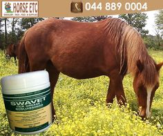 This locally manufactured white grease contains chlorfenvinphos. It is a patch treatment for horses and cattle. To be applied thinly and evenly by means of a brush or gloved hand, into ears and onto bare patches where ticks tend to cluster. #horsecare #equesyriansports #horses