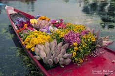 Beautiful Flowers on the flower boat.