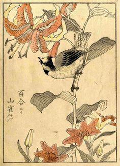 Estampe japonaise, 1880-1900 / ©Musée du Vivant - AgroParistech                                                                                                                                                     Plus