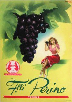 PERINO - GRAPES  by  ROSA