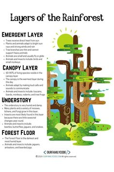 Explore the layers of the rainforest and code the correct animals to each layer using logical reasoning! Rainforest Preschool, Rainforest Crafts, Rainforest Project, Rainforest Theme, Fun Activities For Kids, Science Activities, Jungle Activities, Teaching Kids, Kids Learning
