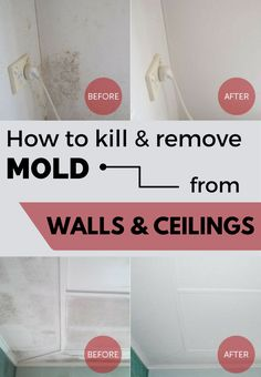 Learn how to kill and remove mold from walls and ceilings.