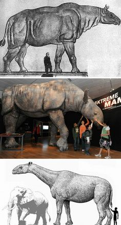 The paraceratherium (also called indricotherium). Paraceratherium is regarded as the largest land mammal known, with the largest species having an estimated mean adult mass of 11 t (12 tons).