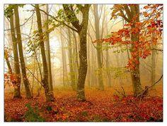 Kuyut Forest - Kirklareli, Turkey