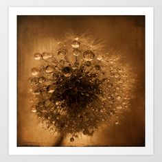 yesterdays wishes.....dandelion Art Print by ingz - $18.00