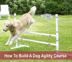 How to Build a DIY Dog Agility Course - Build your pet an agility course that includes jump bars, teeter-totter and weave polls with our ea - Agility Training For Dogs, Dog Agility, Training Your Dog, Training Tips, Leash Training, Diy Dog Run, Dog Playground, Dog Crafts, Dog Activities