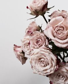 @ t a m i r a r a n i (pink flowers iphone wallpaper) Patterns Background, Pink Flowers, Beautiful Flowers, Flowers Wallpaper, Ft Tumblr, Flower Aesthetic, Spray Roses, Pretty Wallpapers, Planting Flowers