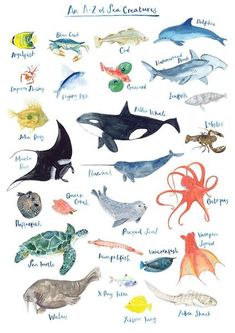 Fiona Purves Bunt A - Z von Sealife Print Fiona Purves - Multi Coloured A - Z Of Sealife Print - Grey/Blue/Teal, Sea Creatures Drawing, Creature Drawings, Animal Drawings, Art Drawings, Sea Creatures For Kids, Sea Creatures Crafts, Sea Life Art, Sea Art, Sea Drawing