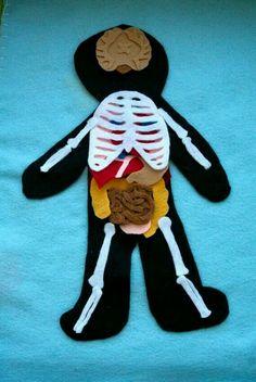 Corpo humano de tecido!