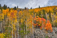 https://flic.kr/p/MQHqYQ | RMNP Aspens | Rocky Mountain National Park  Please check me out at Gary P Kurns Oklahoma Photography