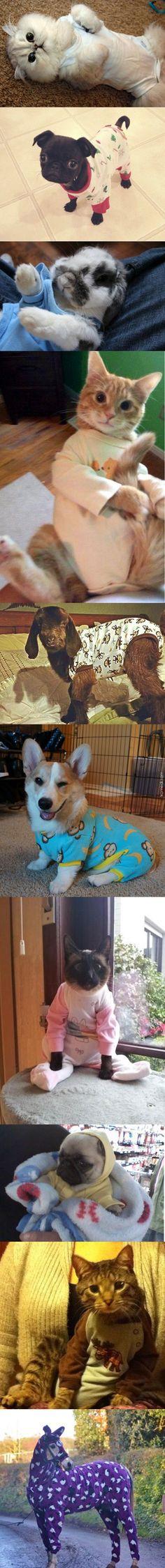 Pijamalı Yavru Hayvanlar