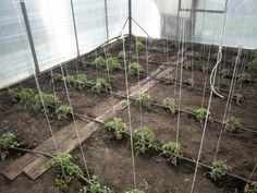 plant. rasad. 010