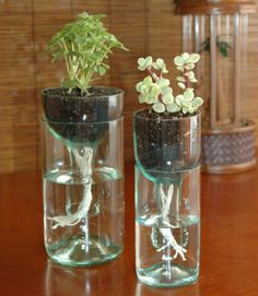 Self-watering planters and Other Ways To Repurpose Wine Bottles DIY Reuse Wine Bottles, Wine Bottle Planter, Wine Bottle Art, Wine Bottle Crafts, Bottles And Jars, Bottle Garden, Recycled Bottles, Glass Bottles, Wine Bottle Fountain