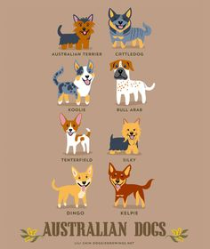 Dogs of the world by Lili Chin - Australian Dogs