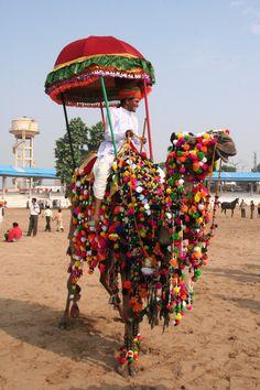 traditional fair at pushkar rajasthan india - Pom poms