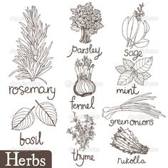 Herb drawings