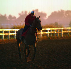 Morning Workouts at The Thoroughbred Center