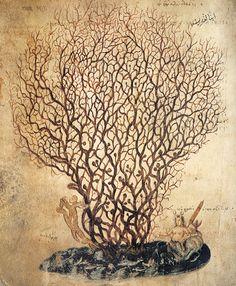 Um coral e Tálassa, a personificação do mar, cerca de 512. Ilustração do Dioscórides de Viena, Biblioteca Nacional Austríaca em Viena. Ascendência: Éter e Hemera.
