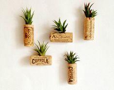 5 air plant cork magnets Living decor- magnets Tillandsia air plant- succulent// unique christmas gift