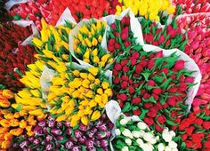 Totally Tulips, a 1000-pc Masterpieces jigsaw puzzle, found in KickAss Crazy at Kickasspuzzles.com. Puzzle 1000, Board Games For Kids, Spring Time, 1000 Piece Jigsaw Puzzles, Tulips, Awesome, Flowers, Amazon, Madness