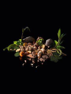 The vegetarian tasting menu. D.O.M.: Rediscovering Brazilian Ingredients. Alex Atala.
