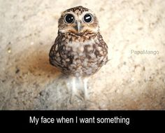 Funny animals with 21 pics like owl bowing. Pictures of funny animals with captions and in high definition. Funny Animal Memes, Funny Animal Pictures, Funny Animals, Cute Animals, Animal Pics, Funny Memes, Funniest Pictures, Owl Animal, Animal Captions