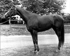 Chris Evert(1971)(Filly)Swoon's Son- Miss Carmie By TV Lark. 3(C)x5(F)x 5(F) To Bull Dog, 5x5 To The Porter. 15 Starts 10 Wins 2 Seconds 2 Thirds. $679,475. Won Mother Goose S(G1), CCA Oaks (G1), Acorn S(G1), Golden Rod S(G3), Demoiselle S(G3), La Canada S, Hollywood Special S, 2nd Alabama S(G1), Frizette S(G1), 3rd Travers S(G1), Comely S(G3). 2nd Dam Of Chief's Crown.