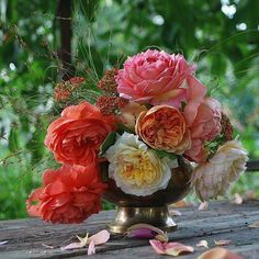 Pretty!! Beautiful Roses, Pretty, Plants, Red, Gardening, Lawn, Flowers, Garten, Planters