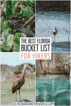 This is the best Florida bucket list for outdoor lovers. You'll find some of the best Florida State Parks and lesser-known outdoor areas in Florida. Hiking In Florida, Road Trip Florida, Florida Vacation, Florida Travel, Florida Beaches, Travel Usa, Florida Girl, Visit Florida, Florida Usa