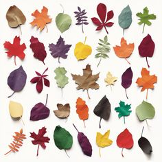 Colored Paper Leaves