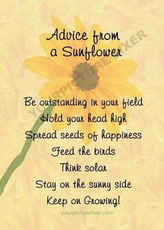 Discover and share Sunflower Quotes. Explore our collection of motivational and famous quotes by authors you know and love. Great Quotes, Quotes To Live By, Inspirational Quotes, Motivational, Awesome Quotes, Sunflower Quotes, Sunflower Gifts, Sunflower Fields, E Mc2