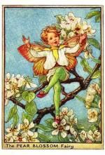 Pear Blossom Flower Fairy Vintage Print by Cicely Mary Barker