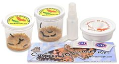 You get: 10 caterpillars shipped when you order now (shipped as 2 cups of 5), caterpillar food, Mister, butterfly feeder, sugar, eye dropper, easy instructions, life cycle coloring page. EVERYTHING EXCEPT A NET CAGE. $24