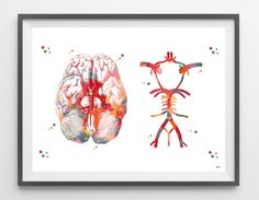 Circle Of Willis watercolor print anatomy art brain by MimiPrints